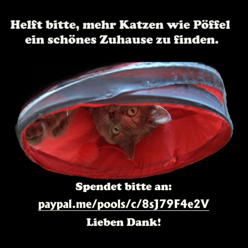Fundraiser Sophie Puffle Pöffel for Fellnasen e.V. Furry Noses Non-Profit Donate today Bitte spenden