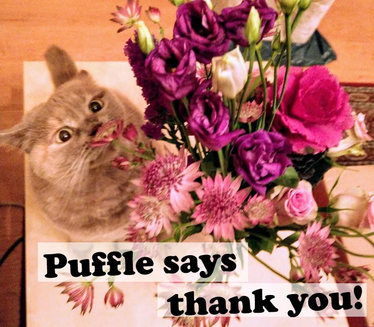 Fundraiser Sophie Puffle Pöffel for Fellnasen e.V. Furry Noses Non-Profit Donate today Bitte spenden