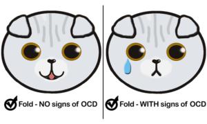 How many Scottish Fold Kitten cat have OCD Poll Results health osteochondrodysplasia Wie viele Schottisches Faltohr Kätzchen Katze Ergebnis Umfrage OCD osteochondrodysplasie statistics Statistik